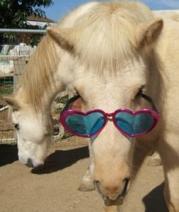 Horse with glasses